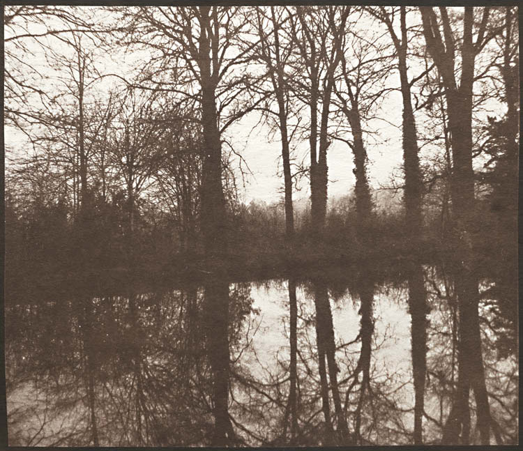 Winter Trees Reflected in a Pond