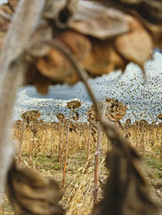 Blackbirds (detail), from My Dakota, 2005–11. Rebecca Norris Webb (American, born 1956). Type-C photographic print; 26 x 35 ½ in. Courtesy of the artist and Rapid City Arts Council / Dahl Arts Center.